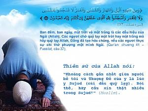 HÃY CÚI LẠY ALLAH